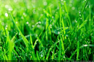 Get a beautiful lawn with maintenance by Turf Solutions 12024 S Easley Rd Lees Summit MO 64086.
