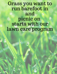 For better lawn care services call the local lawn care experts at Turf Solutions, Lees Summit, MO